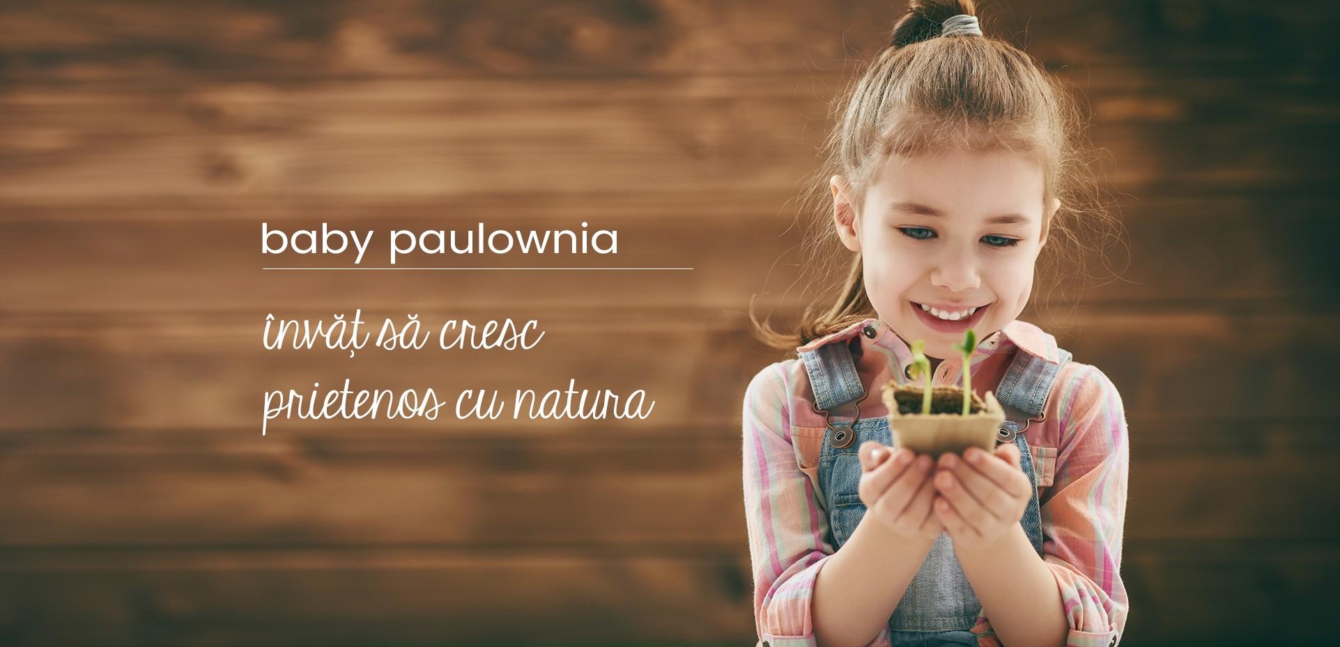 planteaza copac Paulownia